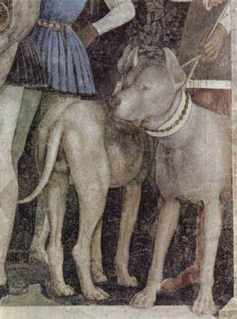 mantegna mastiff